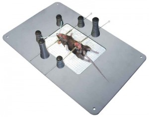 Canica_Mouse_table_400x314