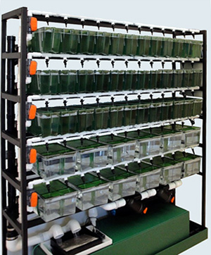 Aquatic zebra fish systems xenopus racks complete with for Fish tank filtration systems