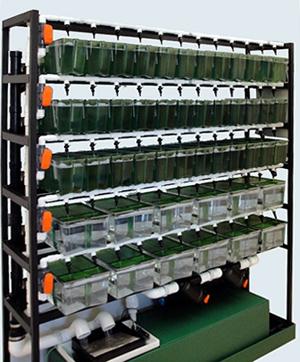 Aquatic Zebra Fish Systems Xenopus Racks Complete With